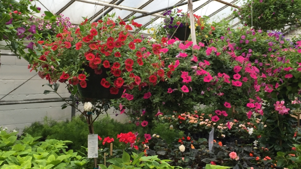 Summer Planting Ideas With Roots On 9th Wluk