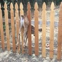 Oregon officer rescues baby deer stuck in fence