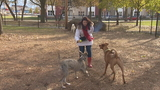 Owners and dogs check out new Green Bay dog park