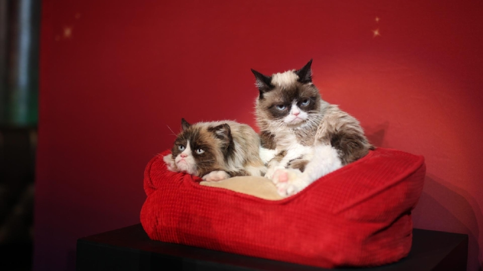 GALLERY | Grumpy Cat meets her wax twin at Madame Tussauds Las Vegas
