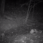 Lebanon, Tenn. man says he's captured video of cougar, TWRA says it's bobcat