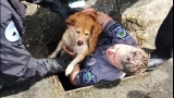 Injured dog rescued from storm culvert in Bothell