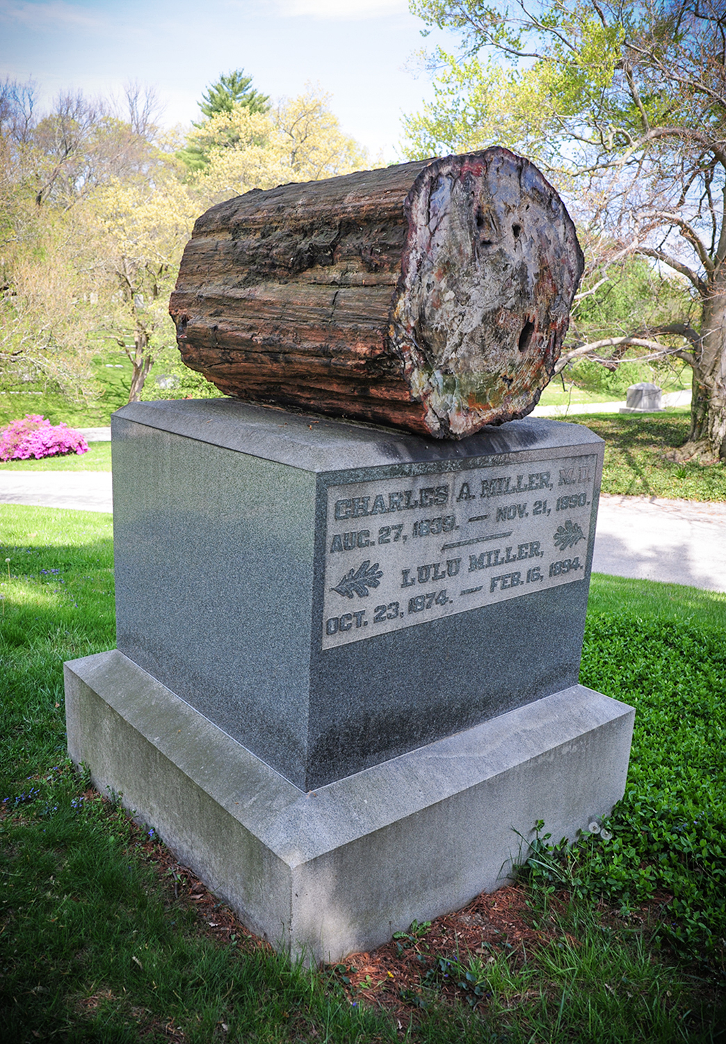 This family monument features a petrified piece of wood. / Image: Melissa Doss Sliney