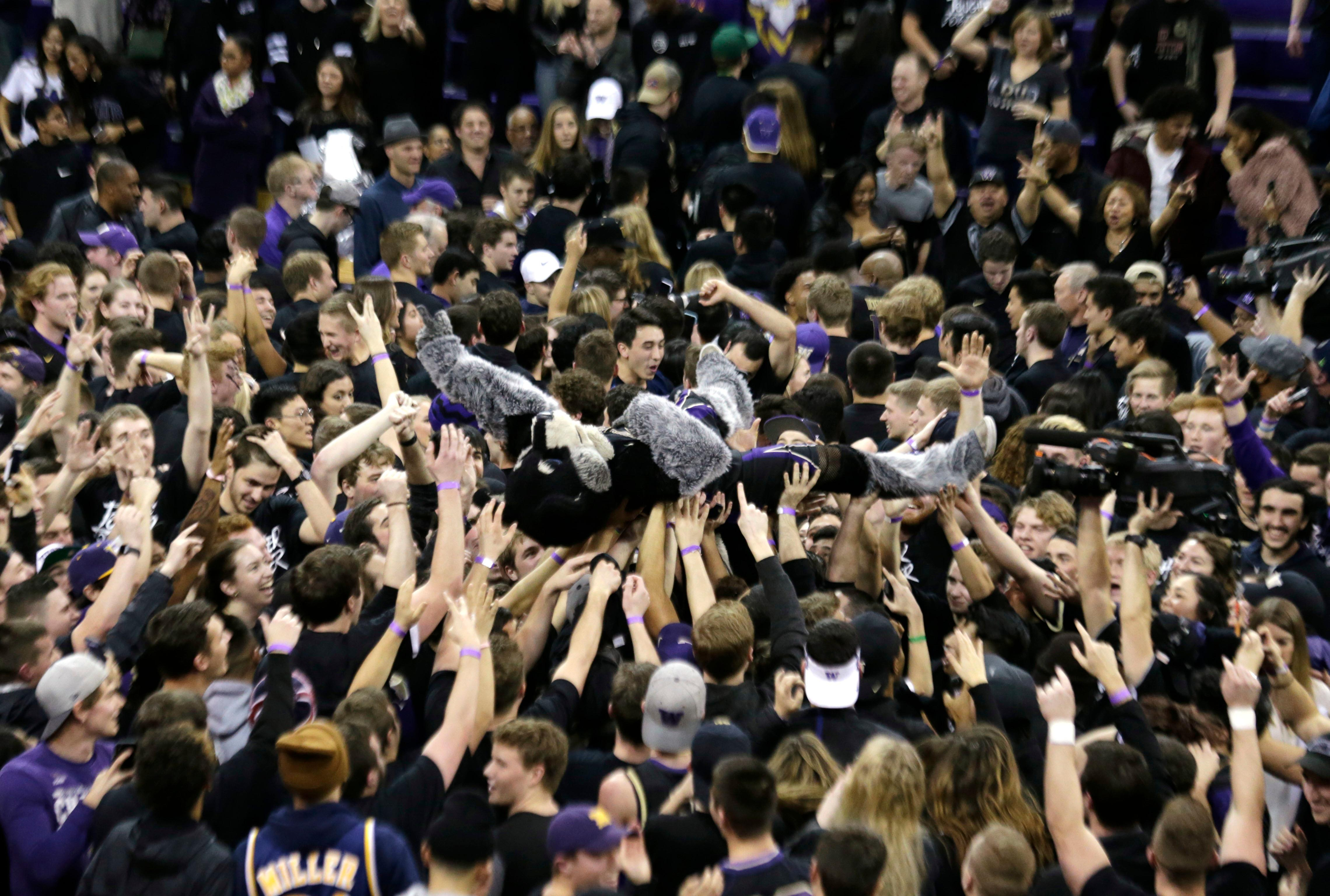Fans hoist Washington mascot Harry the Husky after the team's 78-75 win over Arizona in an NCAA college basketball game Saturday, Feb. 3, 2018, in Seattle. (AP Photo/John Froschauer)