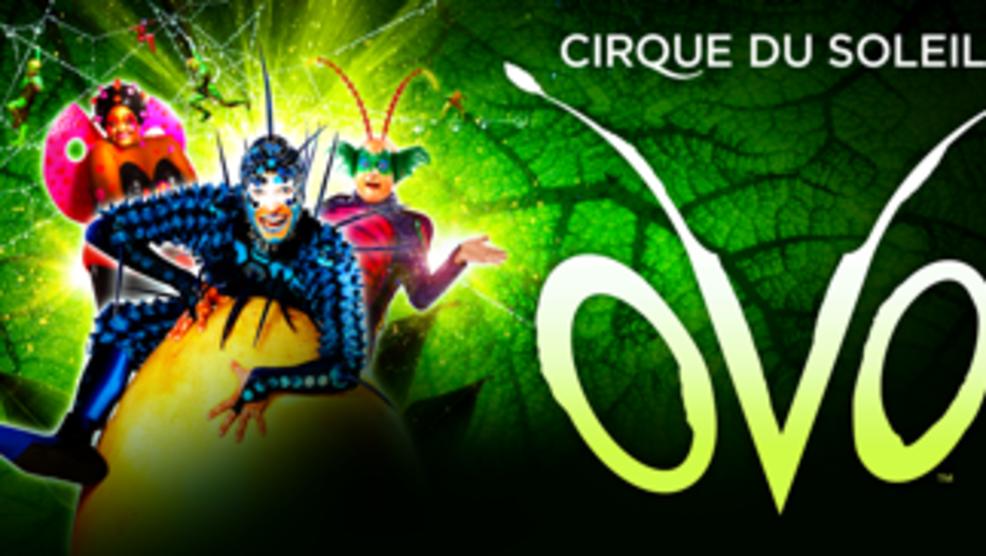 Cirque du Soleil's brings 6 show run of 'OVO' to El Paso