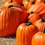Halloween Events around Michiana