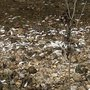 Thousands of dead fish found near creek off Memphis Drive in Chattanooga Thursday