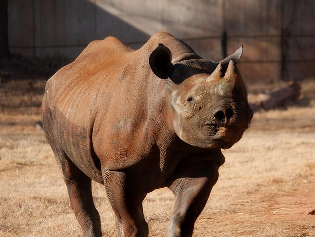 The zoo says she became ill last week and they believe her age brought on the illness.