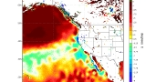 Warm Pacific Ocean 'blob' facilitated vast toxic algae bloom