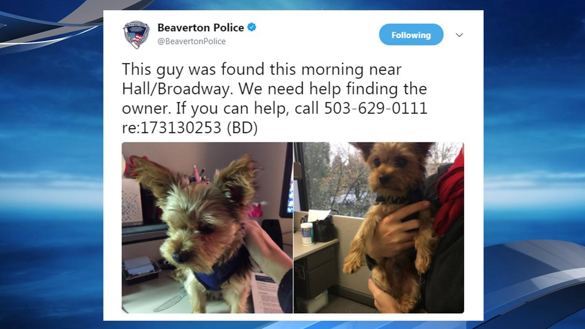 Lost dog found in Beaverton - Tweet from Beaverton Police<p></p>