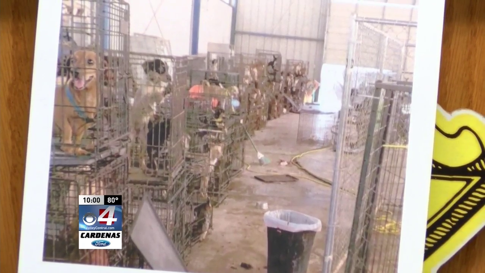 Hundreds of dogs found in Texas warehouse, two men