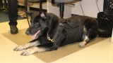 Montgomery County Sheriff's Office K9s receive cooling vests