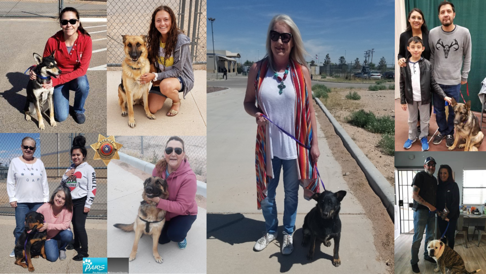 PAWS in Detention program finds homeless pets forever homes