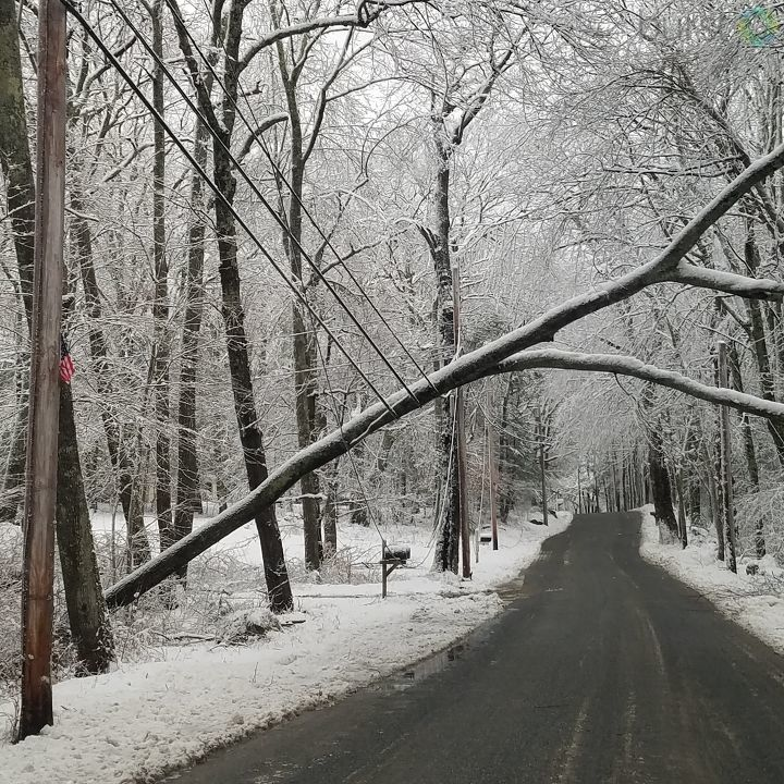 John Daneau took this picture of power lines holding up a tree on Breakheart Hill Road in West Greenwich. (Submitted photo)